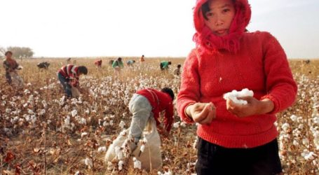 AS Larang Impor Produk Kapas dan Tomat Asal China