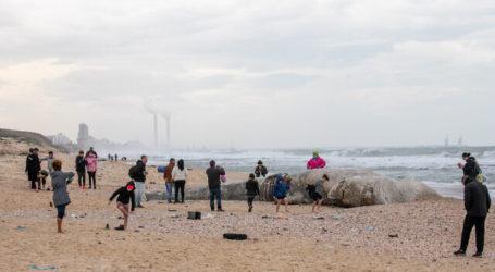 Laut Mediterania Tercemar Ter, Israel Seru Warga Hindari Pantai