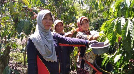 Kabupaten Malang, Diversifikasi Perkebunan Kopi Lindungi Petani