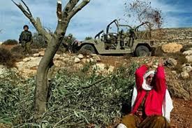 Perusakan Lahan Pertanian Palestina oleh Pendudukan Israel
