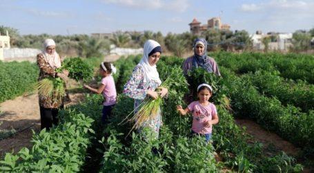 Empat Wanita Bersaudara Gaza Kembangkan Lahan Pertanian