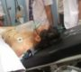Menko Polhukam Wiranto Ditusuk Orang Tak Dikenal